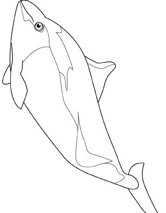 Delfino da colorare 54
