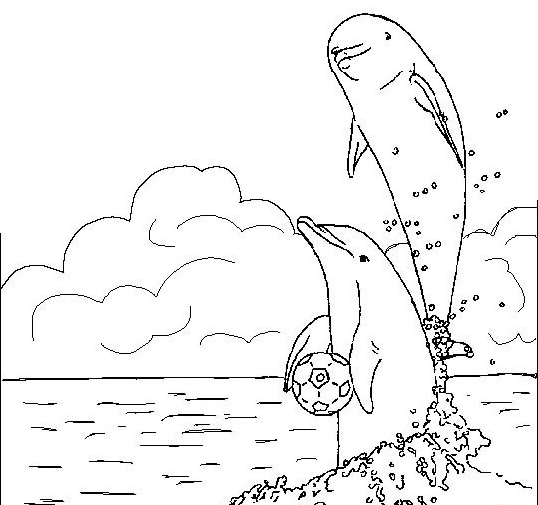Delfino da colorare 57