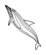 Delfino da colorare 77