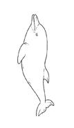 Delfino da colorare 79