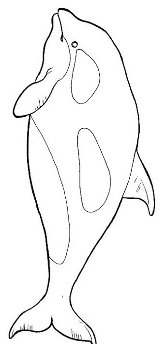 Delfino da colorare 80
