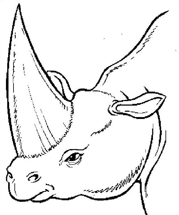 Dinosauro da colorare 195