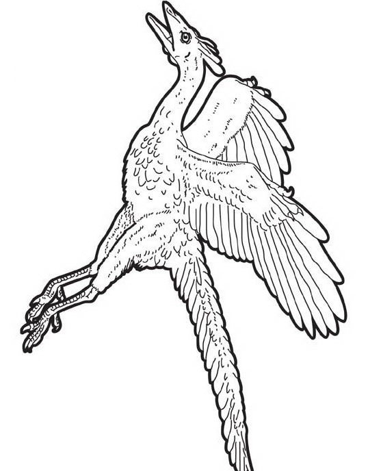 Dinosauro da colorare 297