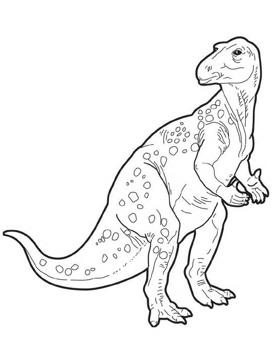 Dinosauro da colorare 309