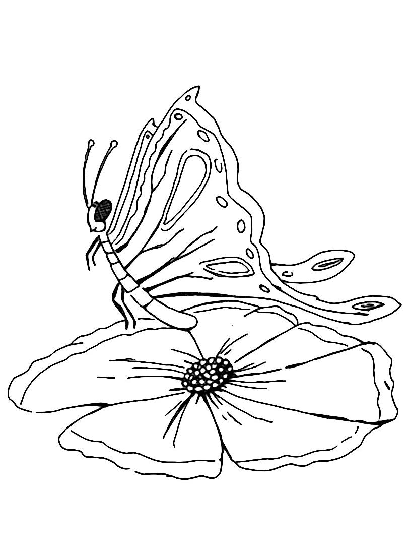 Farfalla da colorare 8