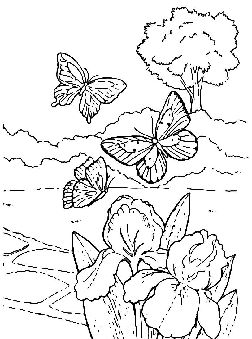 Farfalla da colorare 13