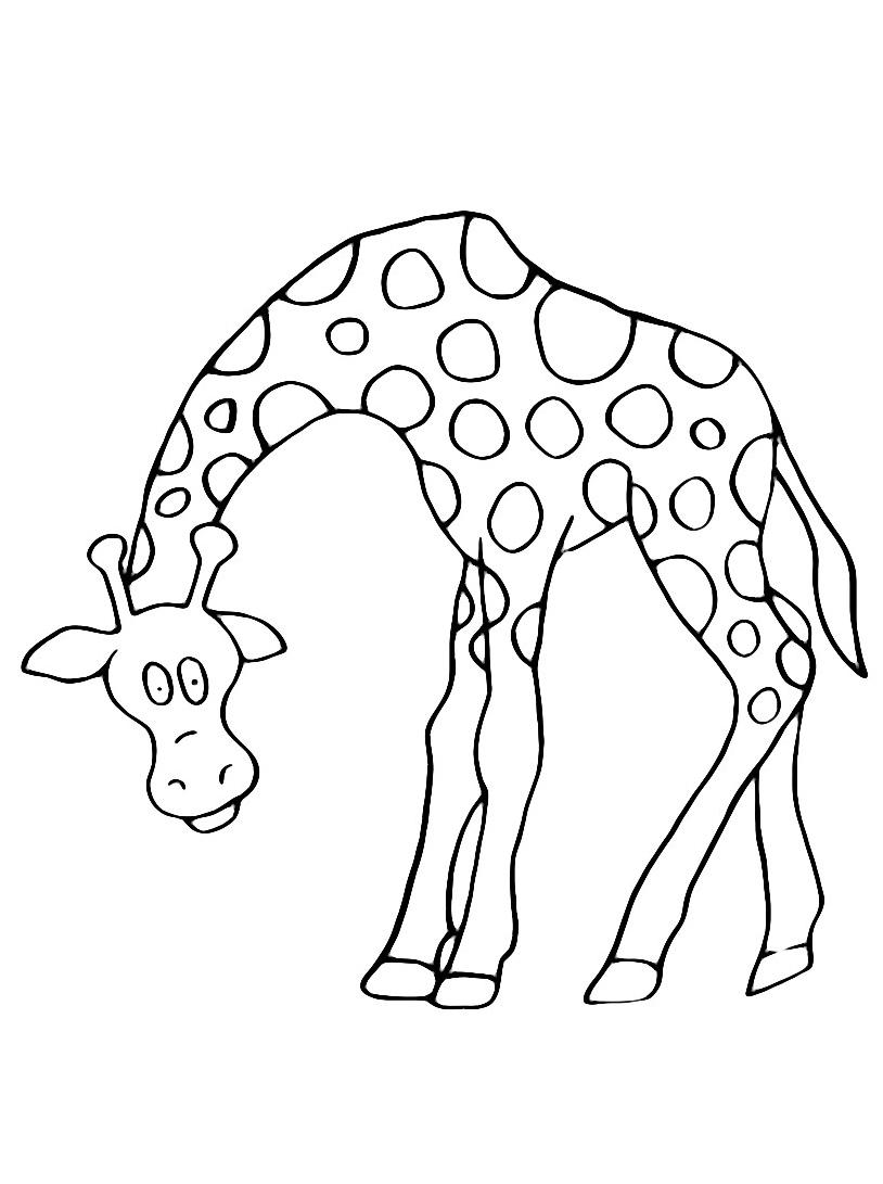 Giraffa da colorare