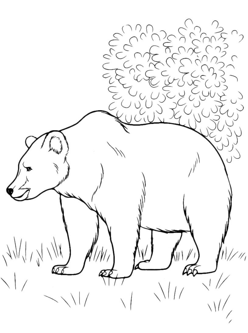 Orso da colorare 33