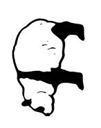 Panda da colorare 10