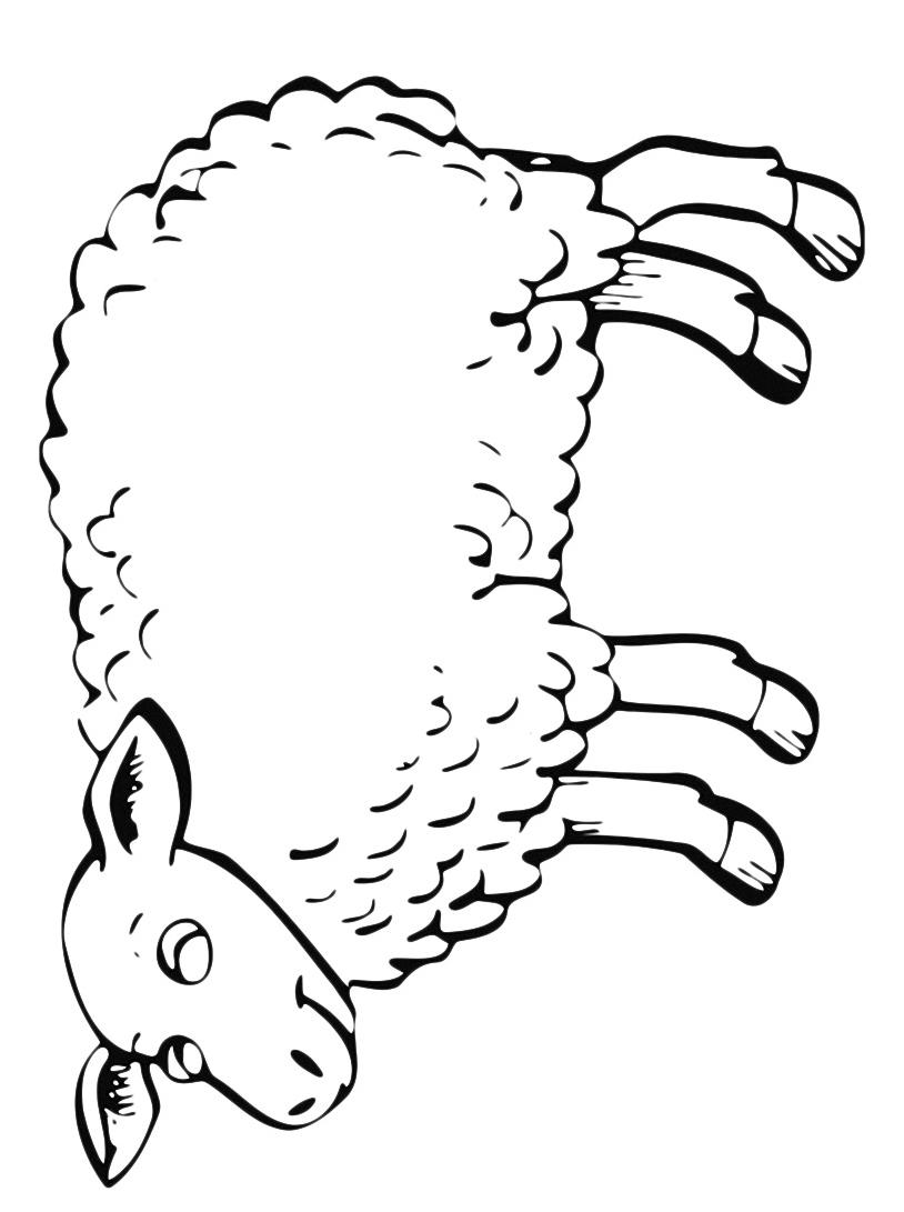 Pecora da colorare 9