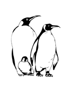 Pinguino da colorare 10
