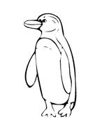 Pinguino da colorare 13