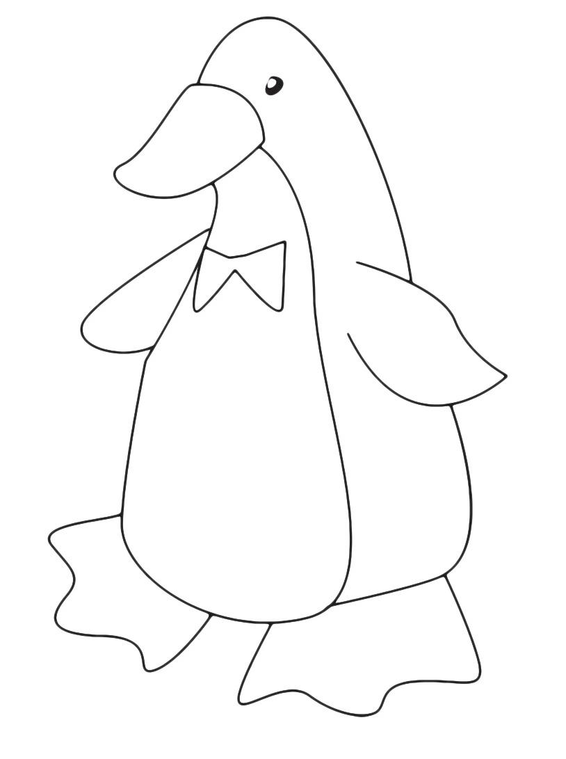 Pinguino da colorare 19