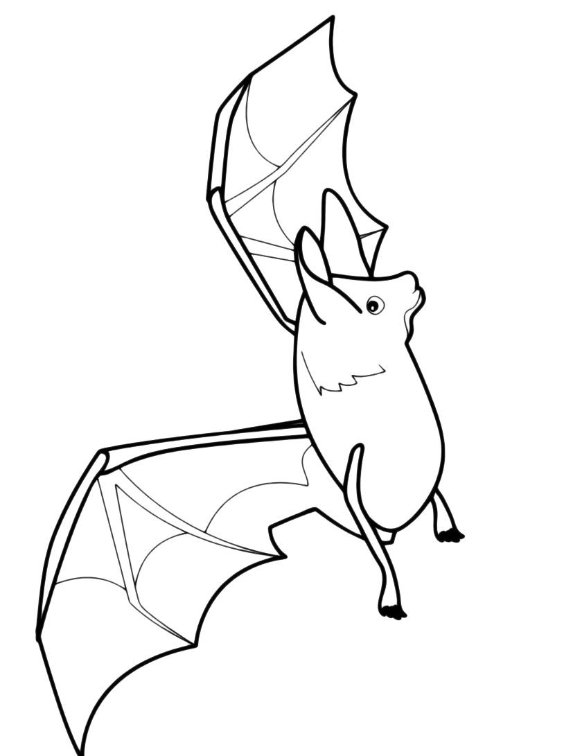 Pipistrello da colorare 6