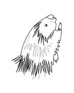 Porcospino da colorare