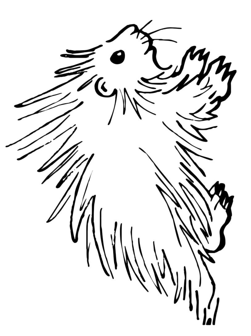 Porcospino da colorare 4