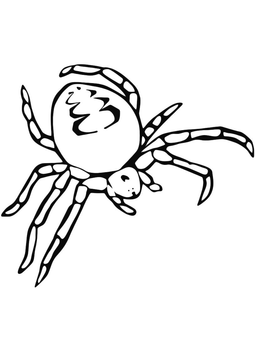 Ragni da colorare 19
