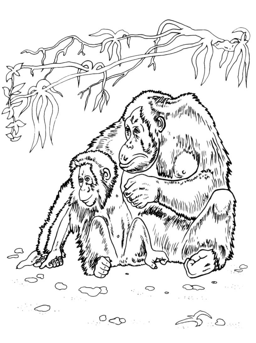 Scimmia da colorare 2