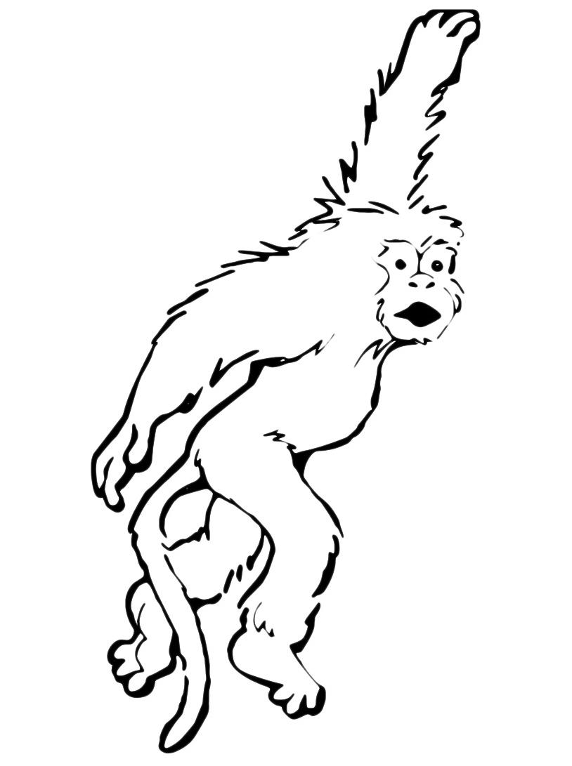 Scimmia da colorare 8