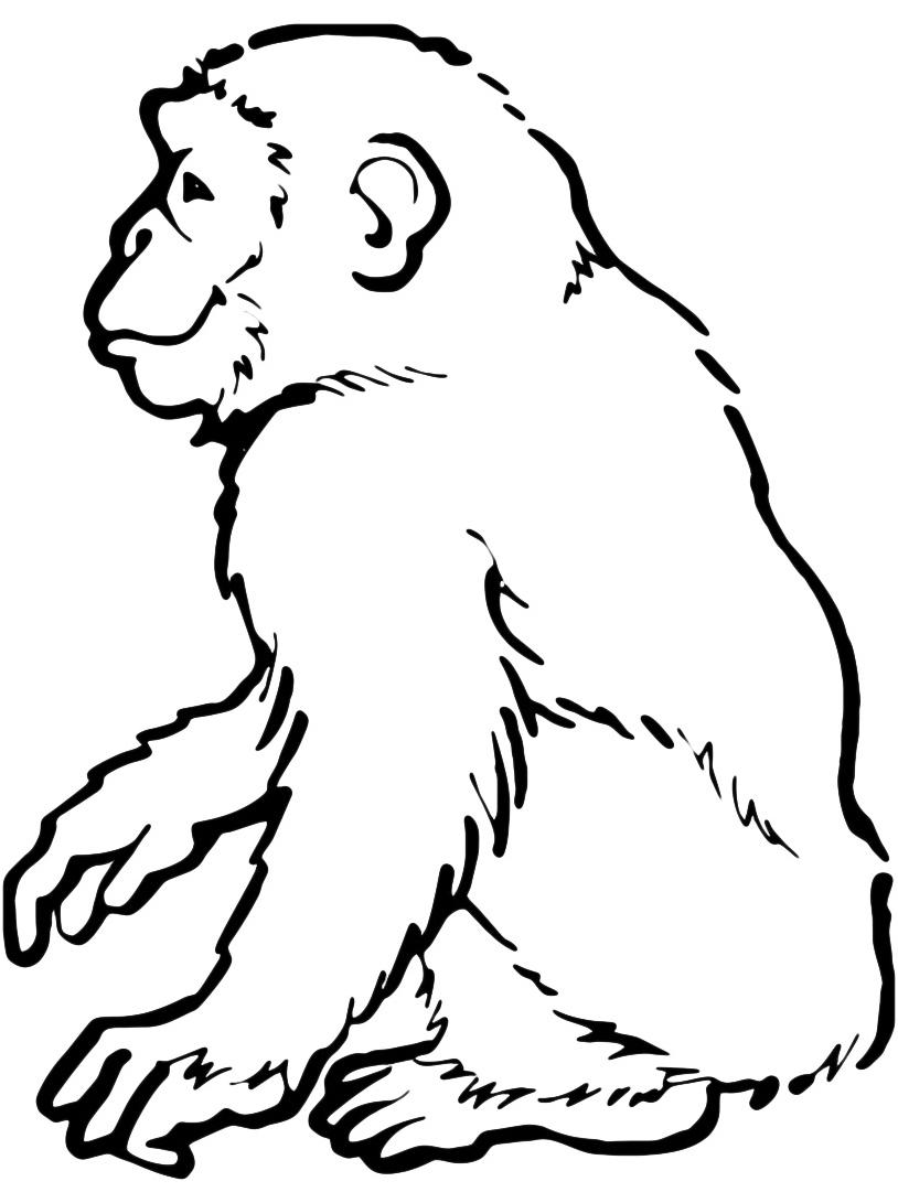 Scimmia da colorare 11