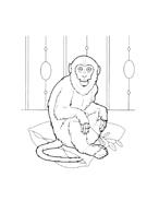 Scimmia da colorare 13