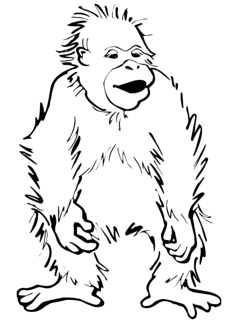 Scimmia da colorare 14