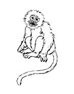 Scimmia da colorare 19