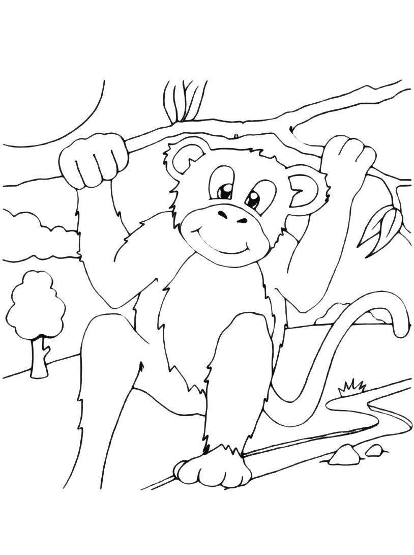 Scimmia da colorare 20