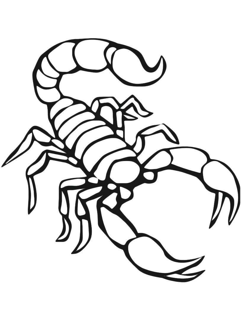 Scorpione da colorare