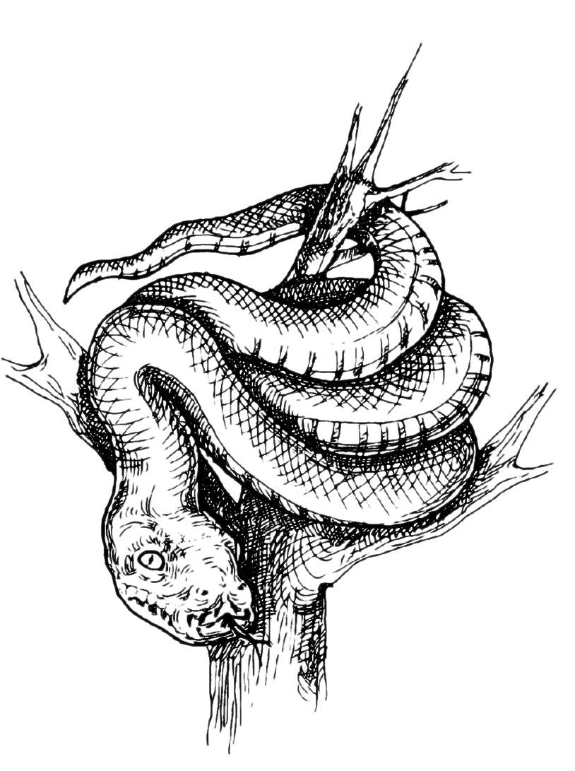 Serpente da colorare 12