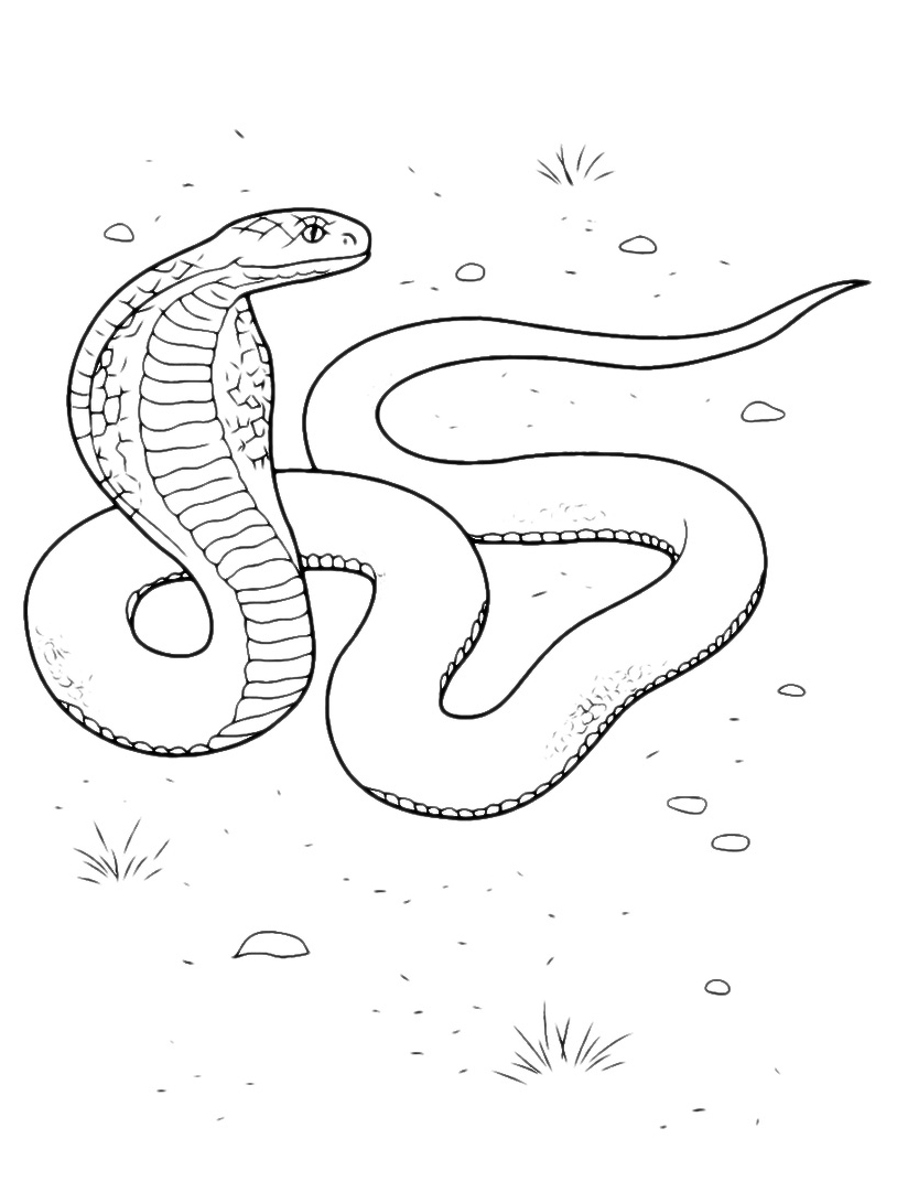 Serpente da colorare 13