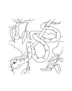 Serpente da colorare 15