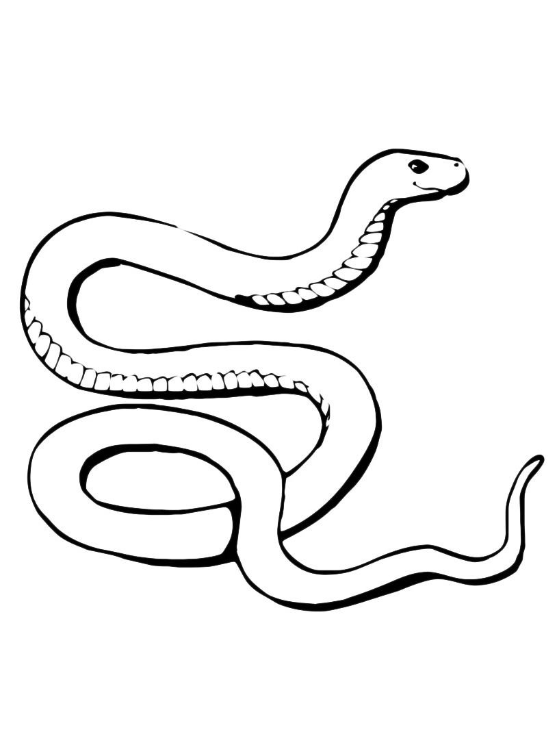 Serpente da colorare 40