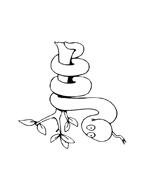Serpente da colorare 47