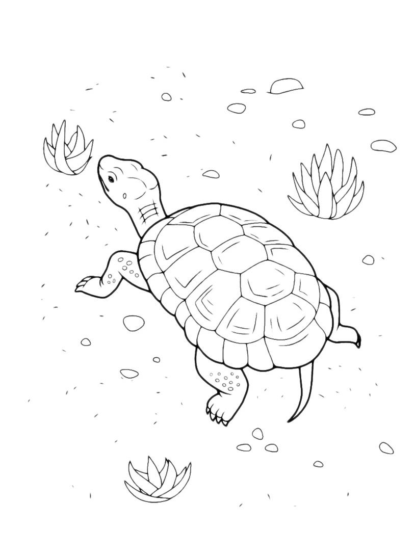 Tartaruga da colorare