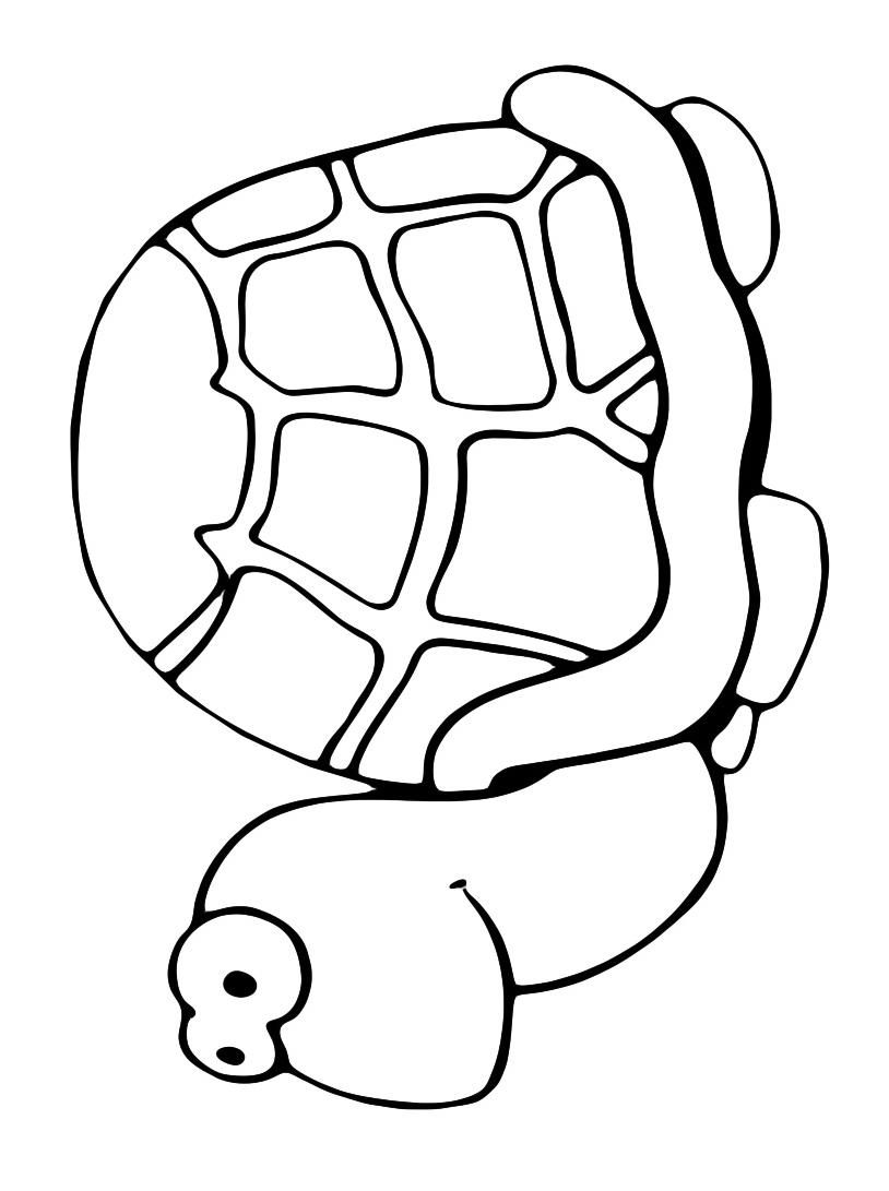 Tartaruga da colorare 2