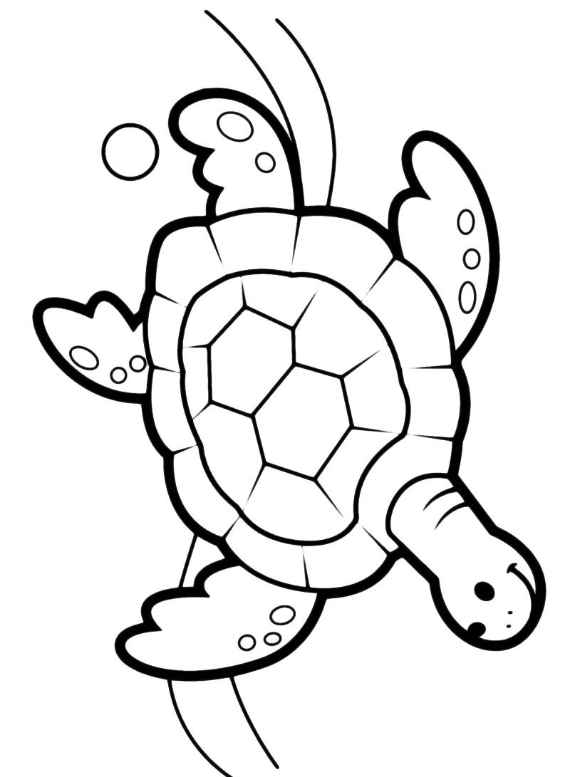 Tartaruga da colorare 12
