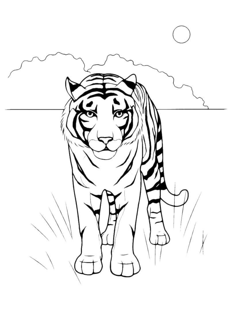 Tigre da colorare 2