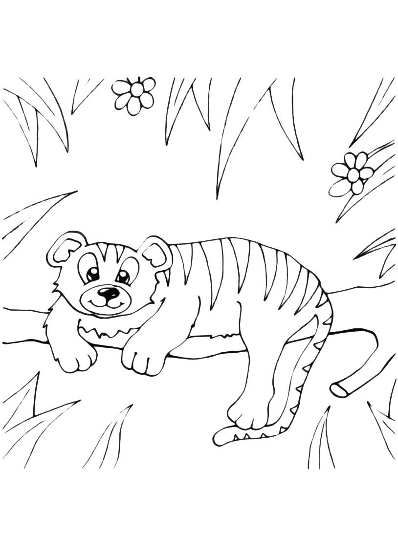 Tigre da colorare 7