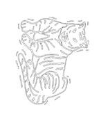 Tigre da colorare 8