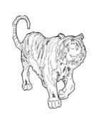 Tigre da colorare 9
