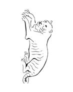 Tigre da colorare 13