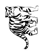Tigre da colorare 16
