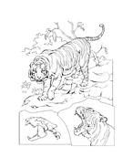 Tigre da colorare 21