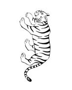 Tigre da colorare 22