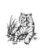 Tigre da colorare 24
