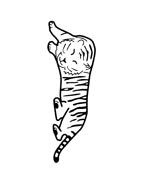Tigre da colorare 30