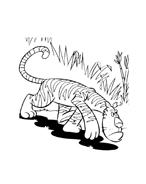 Tigre da colorare 33