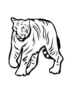 Tigre da colorare 35