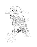 Uccello da colorare 51